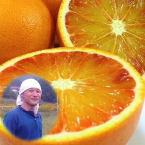 能勢さんの無農薬 ブラッドオレンジ 3kg A品 有機JAS法 準拠栽培 みかん 送料無料 有機みかん 瀬戸内しまなみの瀬戸田産 ブラッドオレンジ 自然豊かな島で育った 無農薬柑橘 無化学肥料 みか