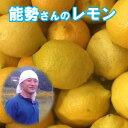 能勢さんの 無農薬レモン 5kg 【A品】レモン 有機JAS法 準拠栽培 レモン 送料無料 黄色レモン 広島県瀬戸田産 レモン …