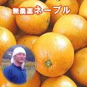 能勢さんの無農薬 ネーブルオレンジ 10kg 農薬・化学肥料不使用 みかん 送料無料 みかん 瀬戸内しまなみの瀬戸田産 ネ…
