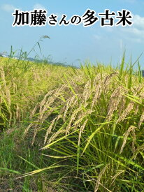 加藤さんの多古米 令和元年産 新米 千葉県多古町産 多古米 5kg×2袋(白米) 【送料無料】多古米の中でも幻の多古米と言われる東佐野産の多古米!農家自慢のお米です。こしひかり 白米/多古米/多古米 精米【多古米白米】【smtb-TD】【saitama】