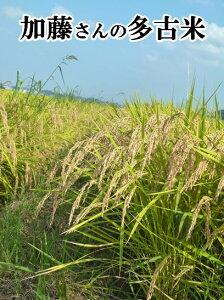 加藤さんの多古米 令和元年産 新米 千葉県多古町産 多古米 20kg(玄米) 【送料無料】多古米の中でも幻の多古米と言われる東佐野産の多古米!農家自慢のお米です。こしひかり 玄米/多古