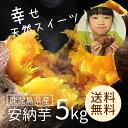 安納芋(鹿児島県産)5kg 【送料無料】 さつまいも 自然貯蔵で追熟済の安納いも 甘味としっとりとした食感が人気の定番品種