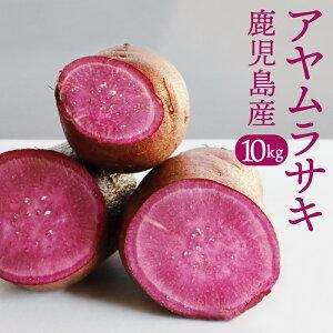 鹿児島県産 土付きさつまいも 紫芋 アヤムラサキ 10kg 送料無料 インスタ系 サツマイモ お菓子作り