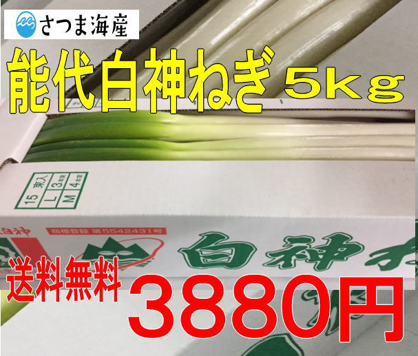 能代白神ねぎ5kg【送料無料】