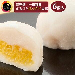 一福百果 はっさく大福 6個入り 愛媛県今治にある和菓子屋 清光堂