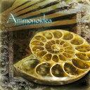 Ammonoidea 01