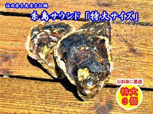糸島 サウンド 特大サイズ 3個セット産地直送 生食用 お刺身 ギフト 贈り物  糸島産 岩牡蠣 岩かき 牡蠣 かき 【送料無料】
