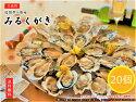 福岡県糸島産みるくがき20個セット