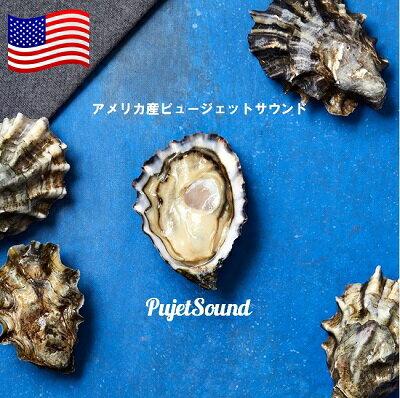 アメリカ産ピュージェットサウンド20個セット