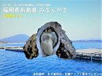 福岡県糸島産みるくがき30個セット