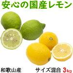 国産レモン秀品約3kg(サイズ混合)和歌山県産【送料無料】檸檬れもんグリーンレモン