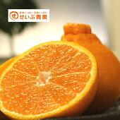 【訳あり】【愛媛県産】不知火(デコみかん)約10kg送料無料