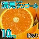 【訳あり】/愛媛県産 清見タンゴール 約10kg/(清見オレンジ) 【送料無料】【みかん ミカン 蜜柑】