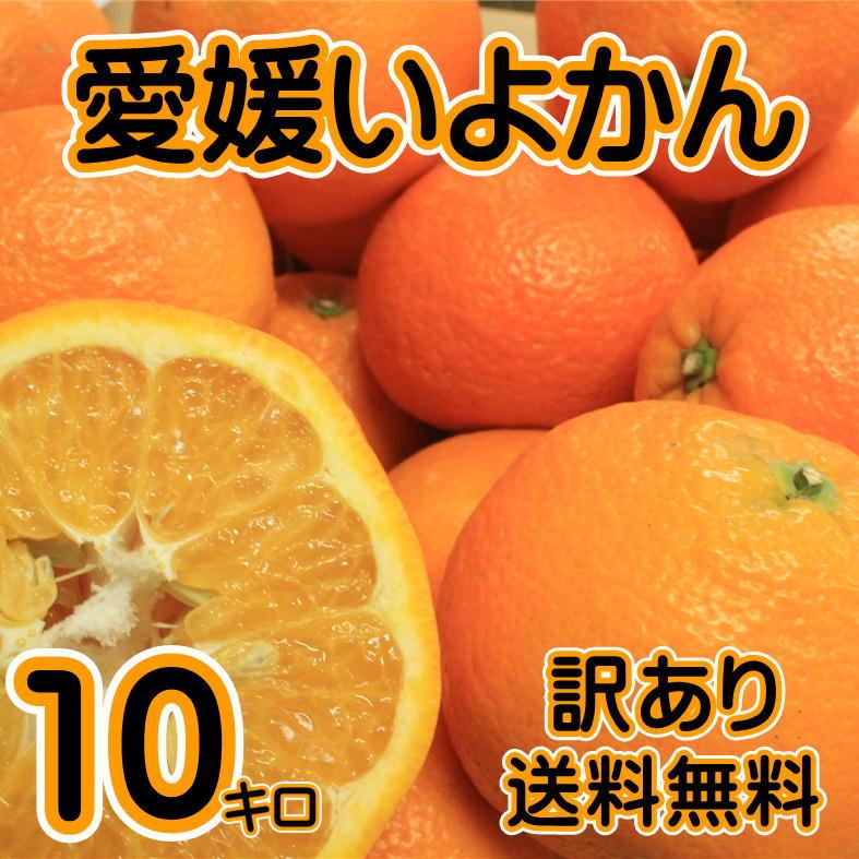 【訳あり】愛媛いよかん 約10kg【送料無料】