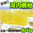 【訳あり】愛媛県産 河内晩柑 約4kg(美生柑・宇和ゴールド) 【送料無料】和製グレープフルーツ