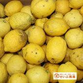 【訳あり】レモンれもん(約10kg)【愛媛県産】