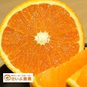【訳あり】清見タンゴール(清見オレンジ)約10kg【送料無料】【みかん/ミカン/蜜柑】3月20日頃より発送開始予定