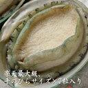 お刺身用殻付 あわび 翡翠の瞳 (7粒)1kg 最大級(大人の掌サイズ) 鮑 アワビ