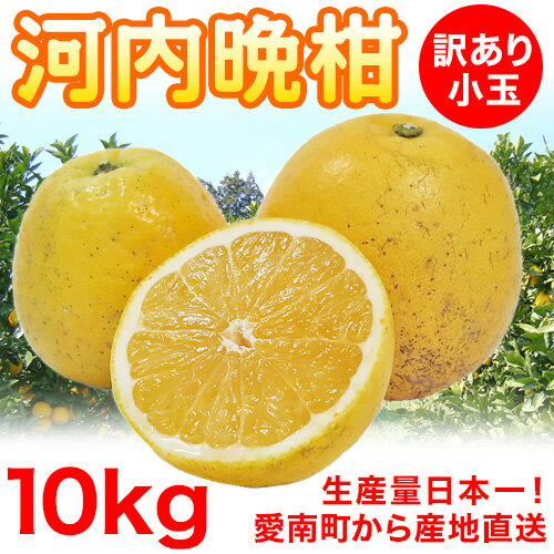 【送料無料】河内晩柑 小玉10kg 訳ありSサイズ【愛媛県愛南町産】
