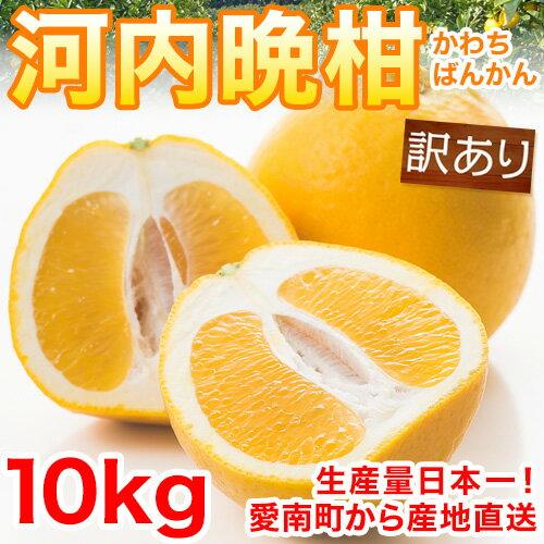 【送料無料】河内晩柑10kg 訳あり M〜2L【愛媛県愛南町産】★柑橘専門店