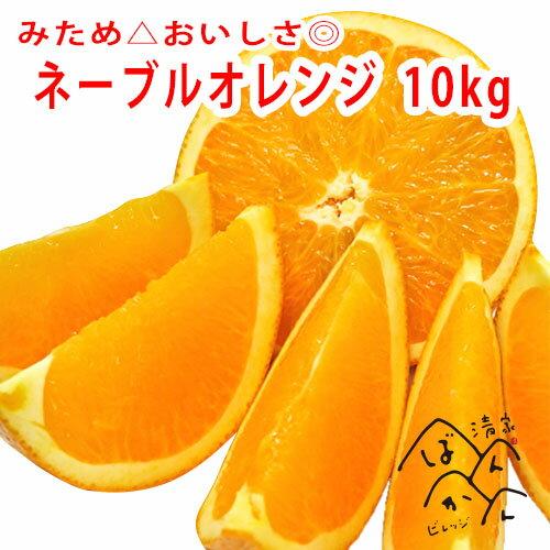 ネーブルオレンジ(家庭用・少し訳あり)中〜大玉10kg みため△おいしさ◎愛媛県愛南町産 送料無料