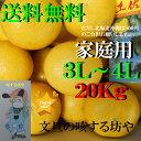 【送料無料】高知産土佐文旦超大玉3L〜4L約20Kg家庭用 北海道沖縄は送料500円のご負担お願いします。2月中旬より順次発送いたします。