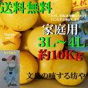 【送料無料】高知産土佐文旦超大玉3L〜4L約10Kg家庭用 北海道沖縄は送料500円のご負担お願いします。2月なかばより順…