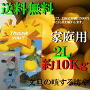 【送料無料】土佐文旦2L約10Kg21玉前後入り家庭用 北海道沖縄は送料500円のご負担お願いします。2月中旬より順次発送いたします。