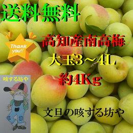 【送料無料】高知産大玉南高梅約4Kgただし北海道沖縄は送料500円のご負担お願いします。