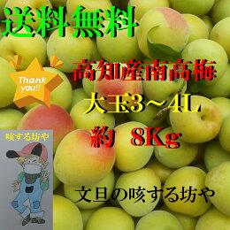 【送料無料】高知産大玉南高梅約8Kgただし北海道沖縄は送料500円のご負担お願いします。
