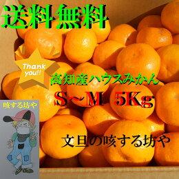 【送料無料】高知産ハウスみかん5Kg贈答用赤秀品ただし北海道沖縄は送料500円のご負担お願いします。