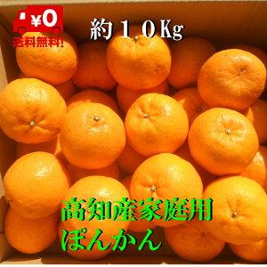 【送料無料】高知産ぽんかん 約10Kg 家庭用サイズM〜2L ただし北海道沖縄は、送料。600円ご負担お願いいたします。