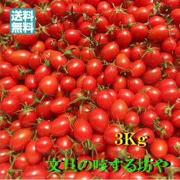 【送料無料】高知産ミニトマト約3Kgただし北海道沖縄は送料500円のご負担お願いします。