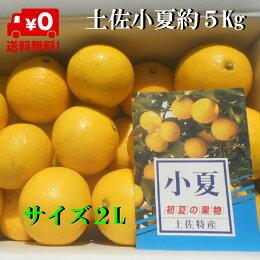 【送料無料】訳あり小夏2L5Kg日向夏ニューサマーオレンジただし北海道沖縄は600円のご負担お願いします。