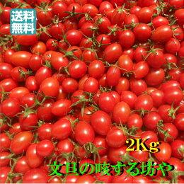 【送料無料】高知産ミニトマト約2Kgただし北海道沖縄は送料500円のご負担お願いします。