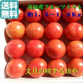 【送料無料】贈答用 高知産フルーツトマト約1,5〜1,8Kg 甘〜いトマトです。トマト好きならたまりません。北海道沖縄は送料800円(100サイズまで)のご負担お願いします。