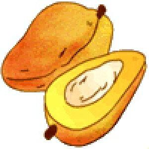 トロピカルフルーツのフレーバー紅茶 マンゴー 100g (50g x 2袋)