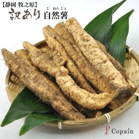 訳あり【静岡牧の原】 長谷川農園 の自然薯(じねんじょ)1kg