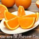 訳あり【送料無料】静岡三ケ日 清見オレンジ サイズ不揃い 5kg