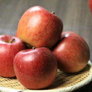 送料無料 ご家庭用 ご贈答用 岩手県産 りんご サンふじ 5kg 産地直送