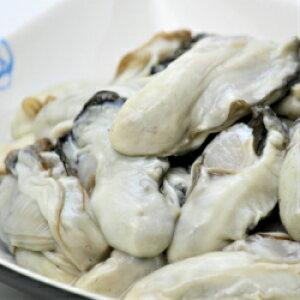 【送料無料】岩手県大船渡産 牡蠣むき身 加熱用Mサイズ 500g(20個〜30個)産地直送