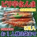 ◆北海道◆厚岸産ピリ辛サンマ5尾入【05P03Dec16】