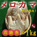 ◆高級魚◆メロカマ肉(約1kg)【05P03Dec16】