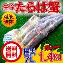 ◆送料無料◆超特大7L◆生◆タラバ足約1,4kg【05P03Dec16】