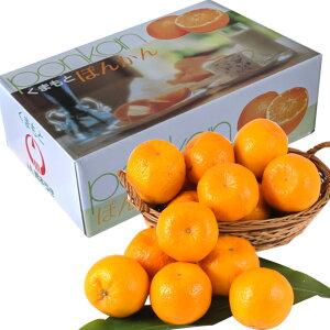 熊本産 ポンカン5kg【化粧箱】【濃厚柑橘】【送料無料】【果物ギフト】【ギフト・ご贈答用】