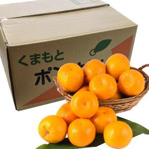 熊本産 ポンカン10kg【濃厚柑橘】【送料無料】【果物ギフト】【ギフト・ご贈答用】【ご家庭用】