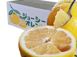 【送料無料】『爽やかな香りにたっぷりの果汁』熊本特産 河内晩柑《ジューシーオレンジ》大玉サイズ(4L〜2L)。今が旬の果物!ご家庭用として、または贈答用としても喜ばれる一品!!