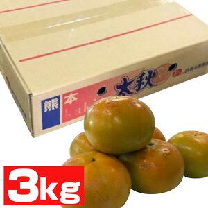 熊本産 太秋柿(12玉)【柿の王様】【送料無料】【ギフト・ご贈答用】【果物ギフト】