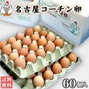 【送料無料】名古屋コーチン卵60個入(破損保証6個を含む)