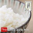 【家庭応援】 【数量限定】 コシヒカリ 5kg 石川県産 米 精白米 【令和元年産】 送料別 【39ショップ対応】